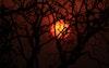 غروب الشمس مع الاشجار