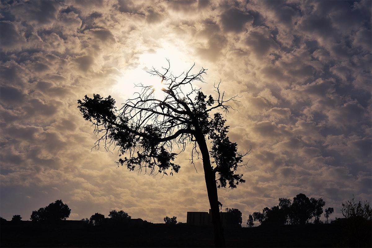شجرة الامل