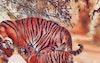 استراحة النمور