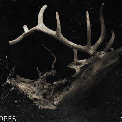 The Deer – Nature Series
