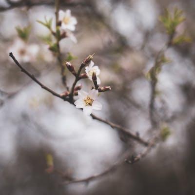 الربيع