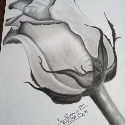 رسم وردة بالرصاص